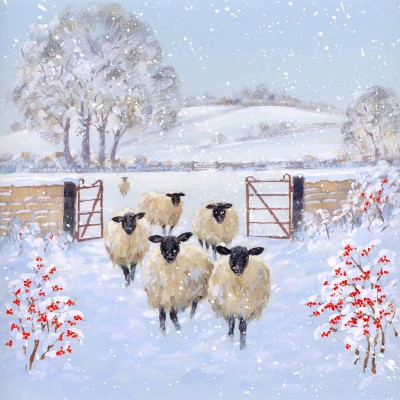 Winter Sheep Welsh Cards, Pack of 10