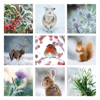 Winter Montage Cards, Pack of 10